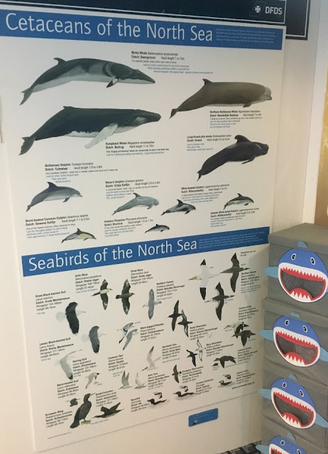 From dolphins to whales to birds, you'll be amazed how many there are. And you can learn all about the wildlife that lives in the North Sea as you sail from Newcastle to Amsterdam on the DFDS KING Seaways ferry on a marine wildlife mini cruise.