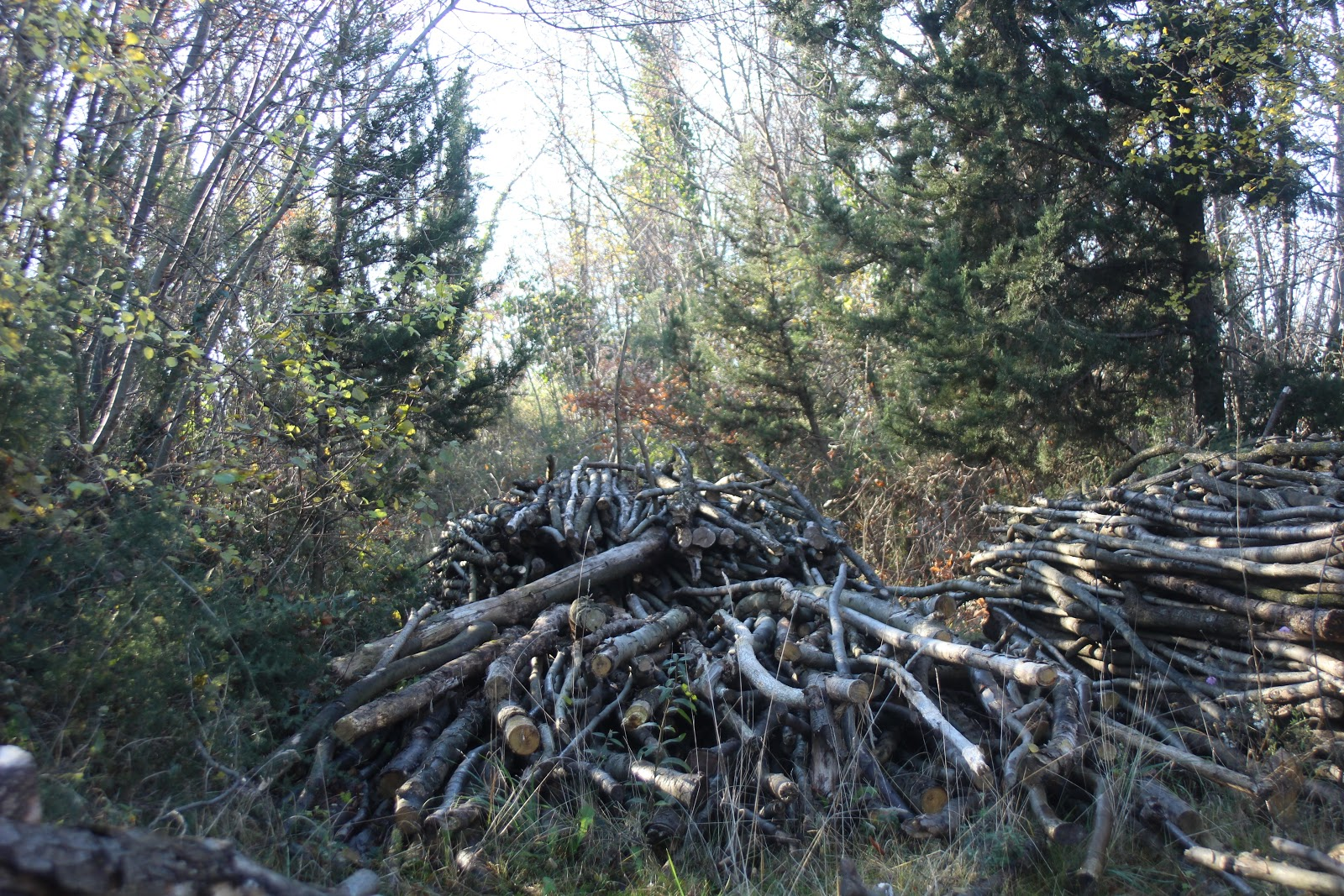 stack-of-wood-in-the-forest