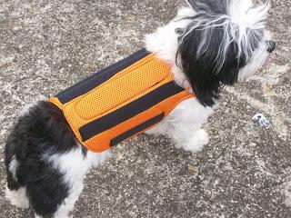 redutor imobilizador para cães