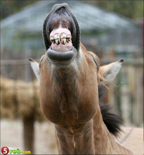 حيوانات مضحكة جدا جدا جدا