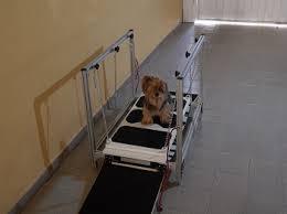 oscilador para cães