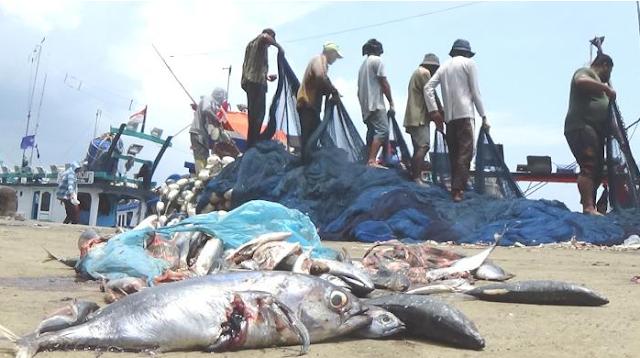 PPS Lampulo Tak Sanggup Tampung Tangkapan Nelayan