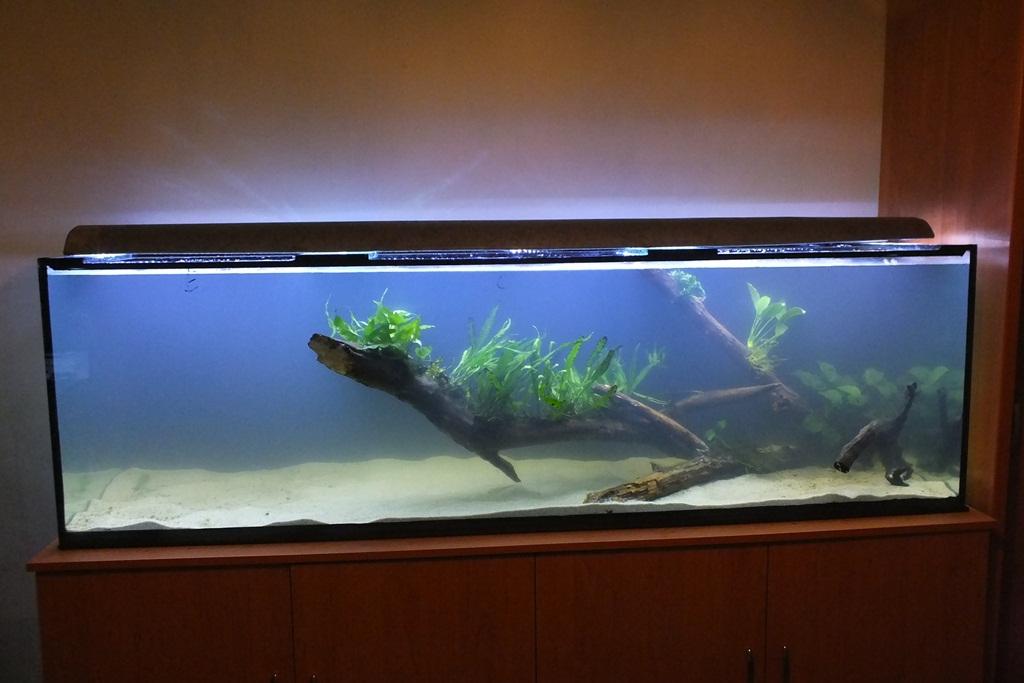 10 dolog, amit tudnod kell az akvárium társításáról