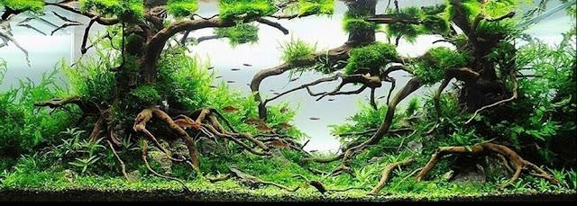 aquascape nature style