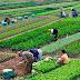 Solo el 30 % de la población mundial tiene registradas de manera legal sus tierras y propiedades.