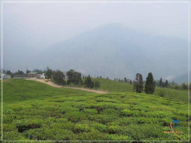 Temi Tea Garden, Sikkim, Índia
