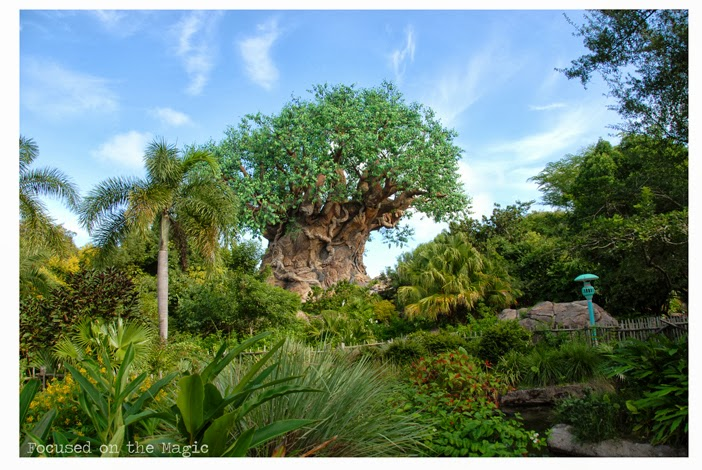 Animal Kingdom Tree of Life Silent Sunday