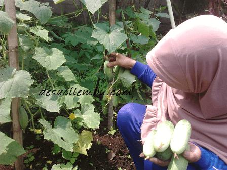 Tips Membuat Kebun di Pekarangan