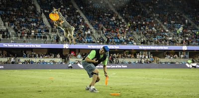 Vader's World during San Jose Earthquakes halftime disc dog show