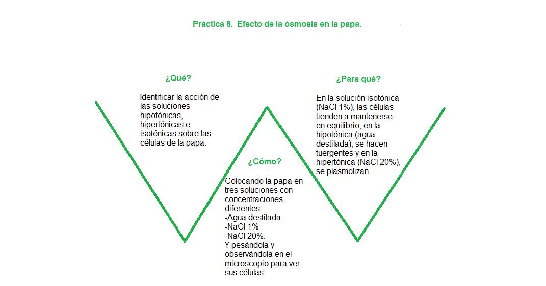 Mi cuaderno de Biología III Rebeca A. Hdz. Dguez: V de