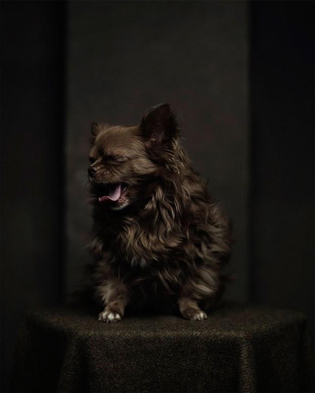 Expressive Animal Portraits Reflecting Strong 'Human' Emotions