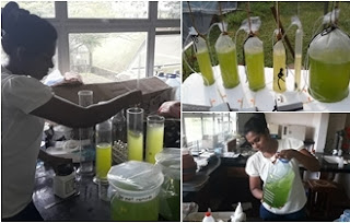 Ruhunu Campus Makes diesel Using algae and coconut scraps
