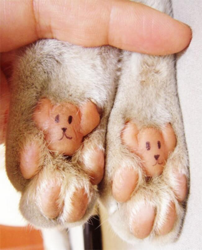 25 Thrilling Images That Made Our Day - Two teddy bears hidden on your cat's paws