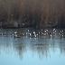 Ιωάννινα:Το βολτάρισμα των πουλιών σε παγωμένο τμήμα της λίμνης [φωτό βίντεο]