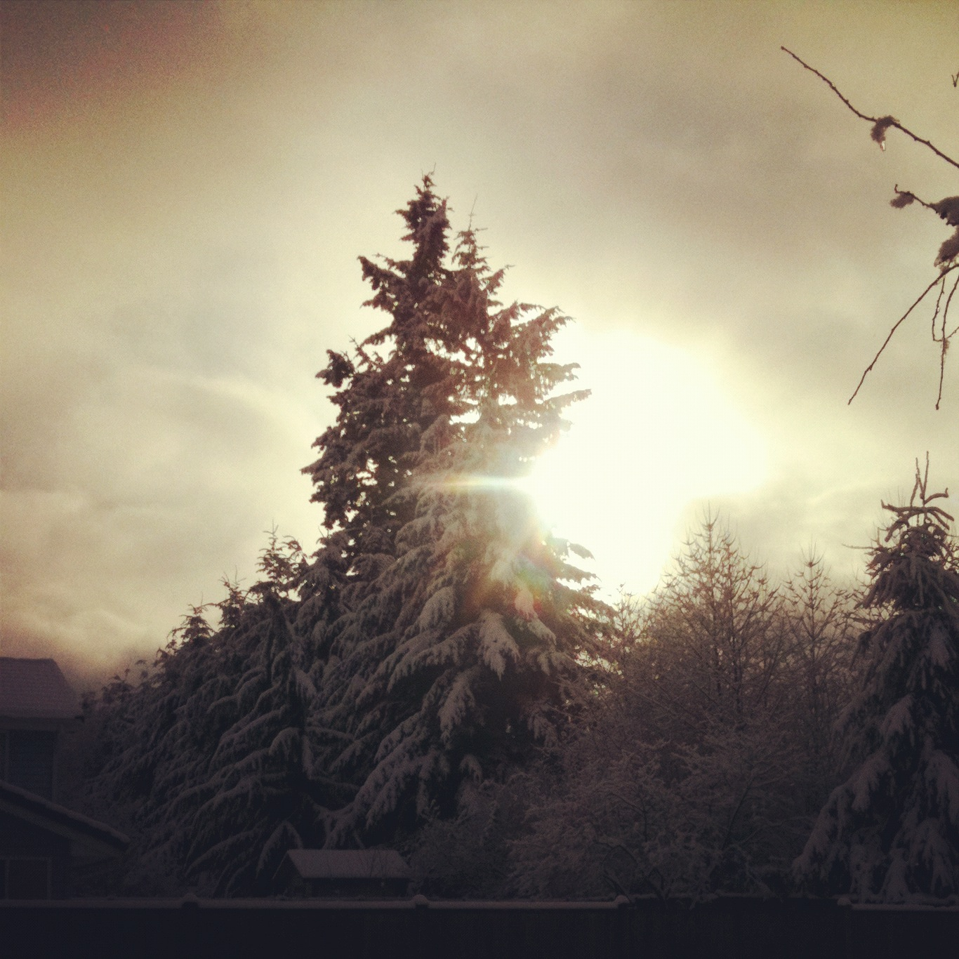 Little Gray Fox: Seattle's Arctic Blast 2012 - Instagram Style