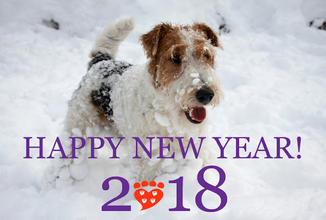 This terrier in the snow wishes you a Happy New Year 2018 from Companion Animal Psychology