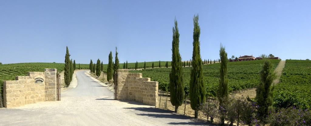 Jerez Xeres Sherry Table Wine Bodegas Luis P 233 Rez