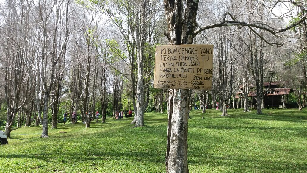wisata kebun cengkeh_ternate