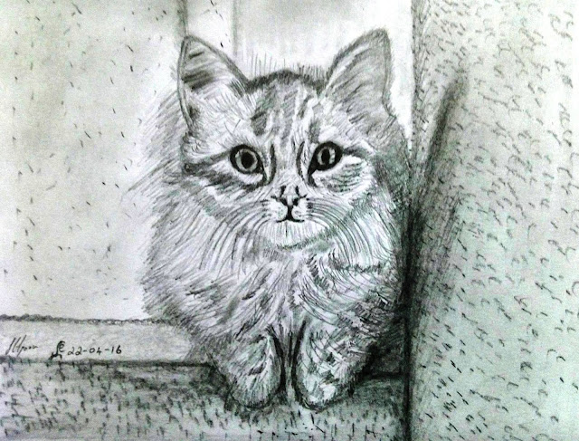 PENCIL DRAWING - CAT