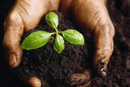 Pengelolaan Pencemaran Tanah
