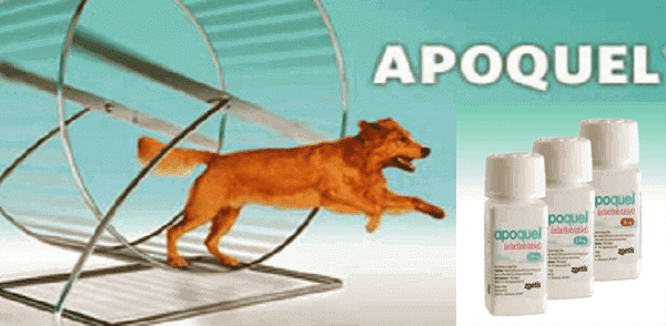 apoquel for dogs,16 mg alternatives reviews  for cats natural sale generic