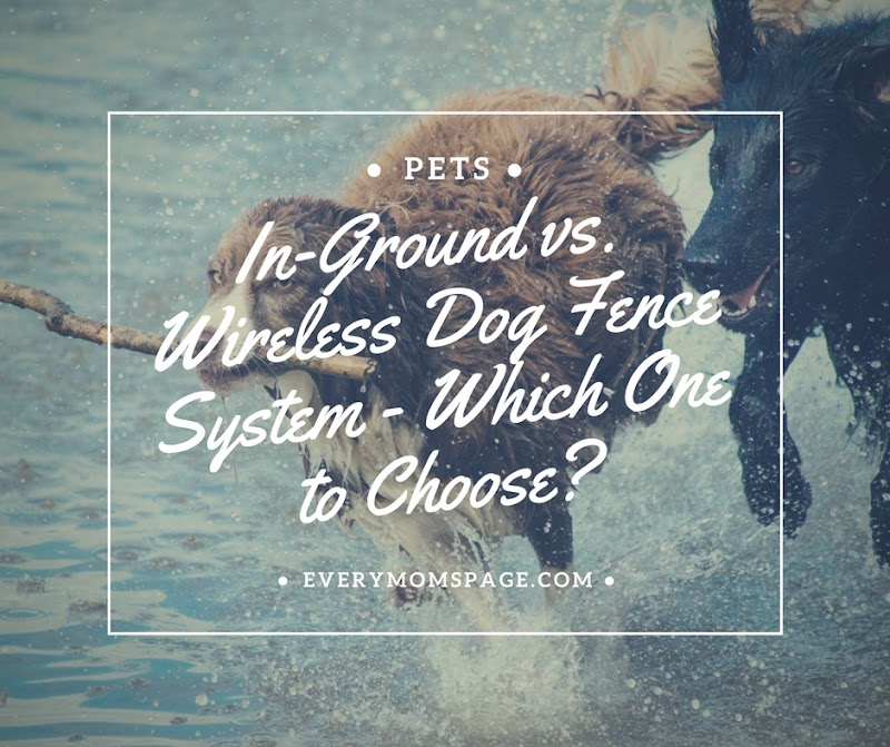 In-Ground vs. Wireless Dog Fence System - Which One to Choose?