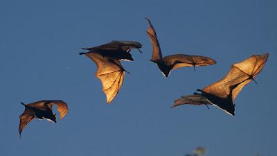 bats facts