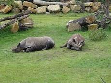 Tiergarten Schönbrunn, Kebun Binatang Vienna , Kebun Binatang Tertua Di Dunia