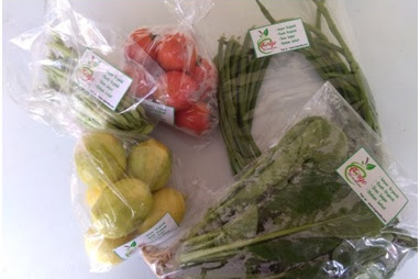 Sebuah Kisah Bersama Sayur Organik