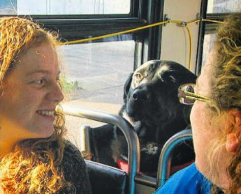 Black labrador named Eclipse has boarded a bus alone near its home in the neighbourhood of Belltown, riding about four stops to a nearby dog park.