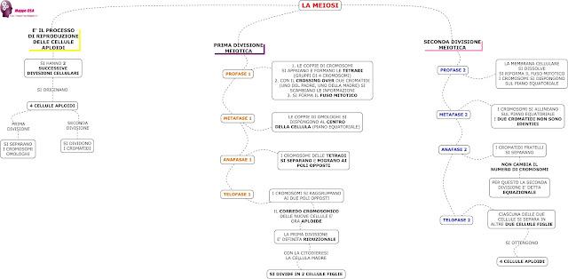 mappedsa mappa mappe dsa schema dislessia disturbi apprendimento scienze medie superiori secondaria primo secondo grado riproduzione cellulare meioisi mitosi divisione