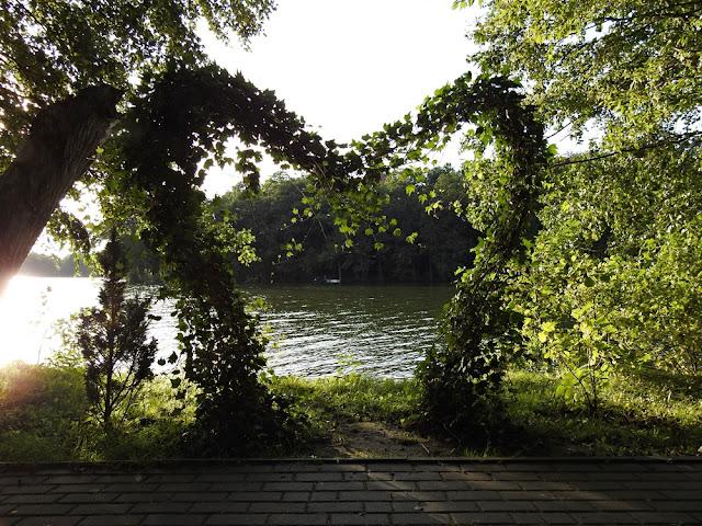 roślinność w kształcie serca nad jeziorem w Lubniewicach