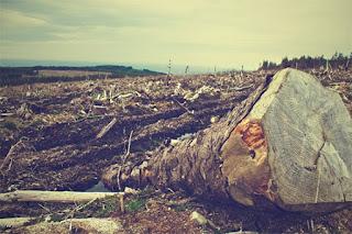 Acusados de crime ambiental terão que recuperar área desmatada