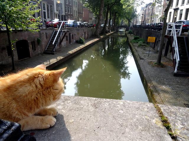 Cat Nieuwegracht