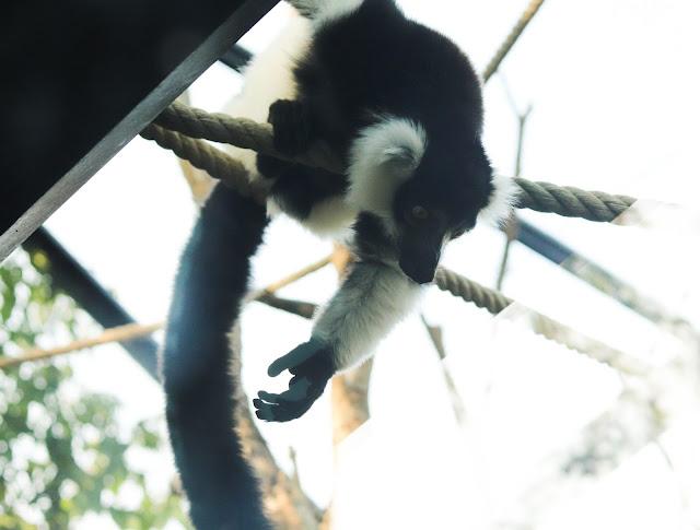 animaux du zoo de vincennes