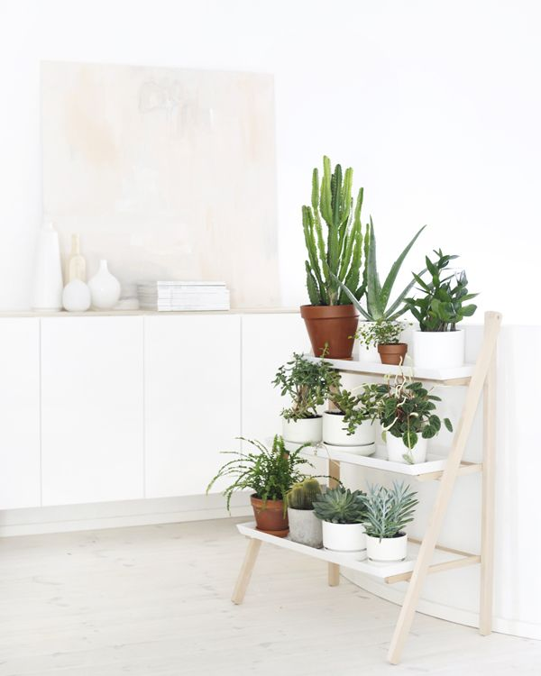 Inspiracion Para Decorar Con Plantas Puntxet Tienda Online Y - Decoracion-plantas