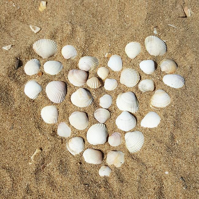 seashells, Muscheln, Herz, heart, beach, Strand, vacation, Urlaub