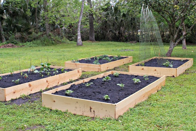 Raised garden beds that can be built in your backyard.