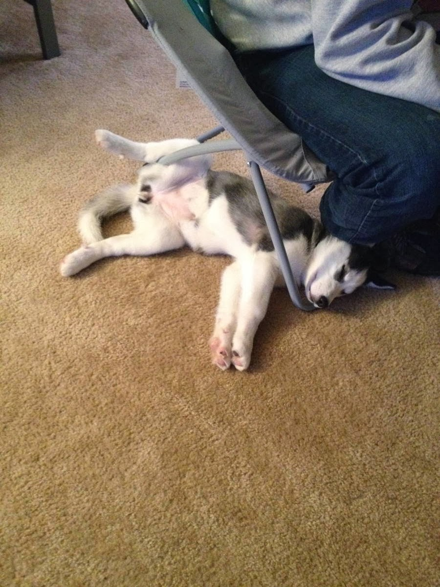 Cute dogs - part 9 (50 pics), husky puppy sleeps in funny position