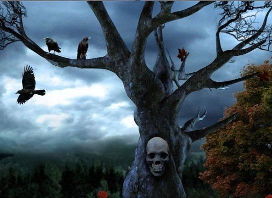 fenomena burung gagak dan misterinya