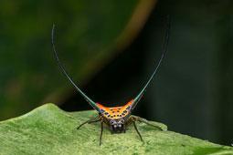 Long-horned orb weaver spider