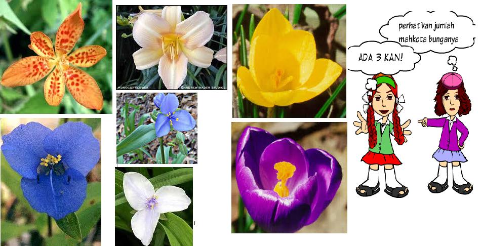 Intan Nirmala Blog s TUMBUHAN BIJI Spermathophyta