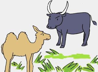 Il cammello va da Zeus - Esopo