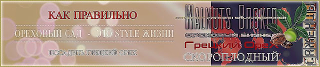 Простые шаги при посадке саженцев грецкого ореха Идеал, Кочерженко и Иван Багряный