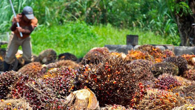 ¿Infartos, cáncer, deforestación...? Los verdaderos peligros del aceite de palma