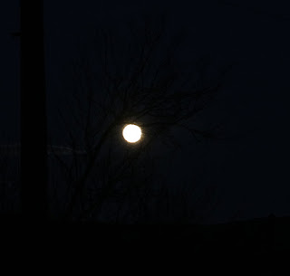 This is the moon behind a tree. Honest