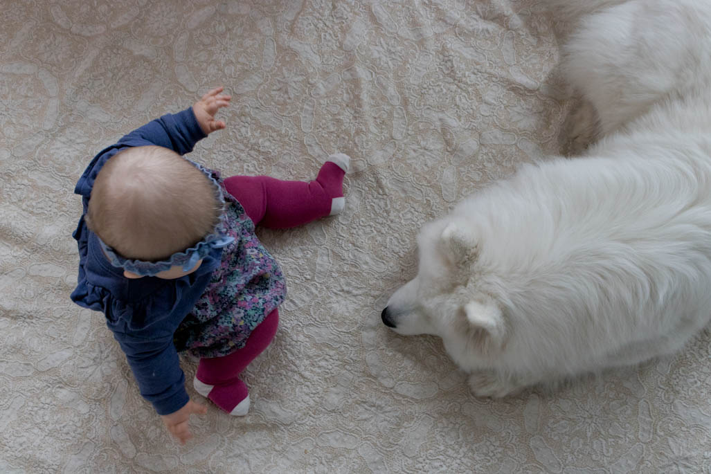 Mikromunakas Vauvalle