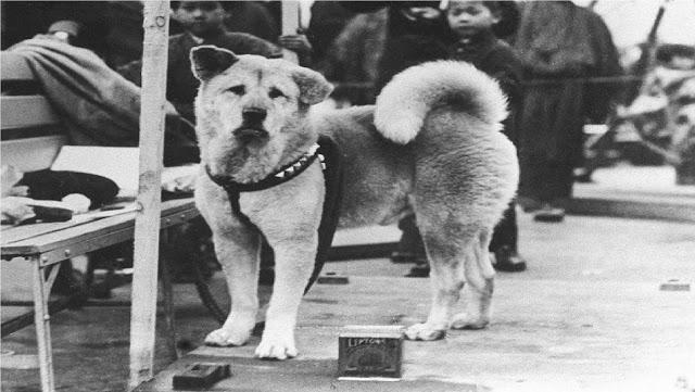 تعرف علي القصة المحزنة قصة الكلب الذى انتظر صاحبة 10 اعوام كاملة فى محطة القطار !!