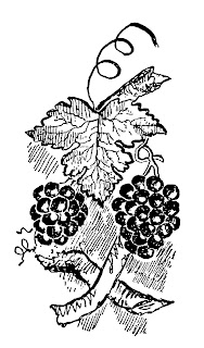 grapes fruit image clipart illustration botanical artwork