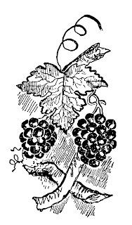 grapes fruit image clipart illustration botanical artwork